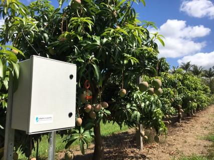 Dissolved Oxygen Monitoring System