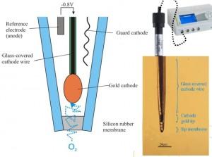 Amperometric Gas Sensor