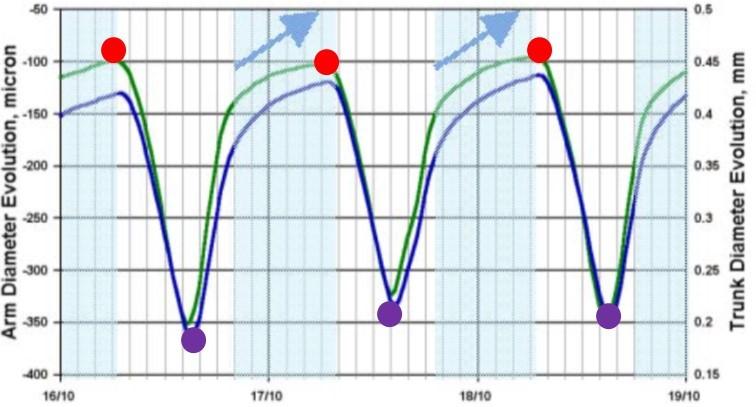 MDS Dendrometer Data