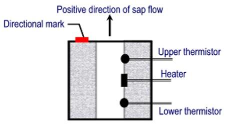sap flow diagram
