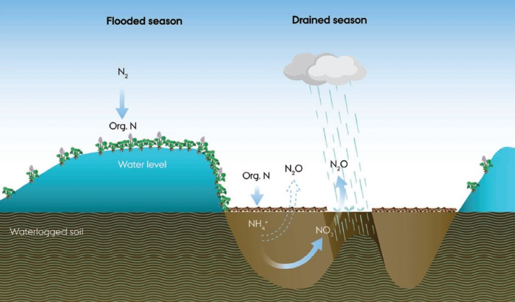 A conceptual drawing of a one year period depicting how nitrifying and denitrifying microbes produce and consume N2O with wetting and drying cycles. Image source: Liengaard et al (2013), Figure 11.