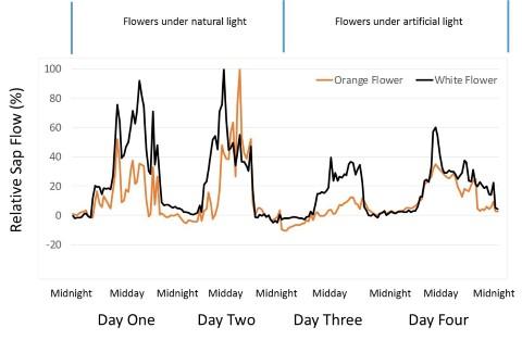 Flower Transpiration Data