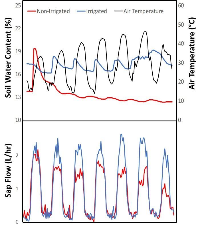 Soil Moisture and heatwaves