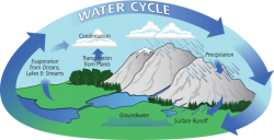 Trees and Water Cycle