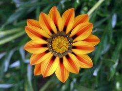 flower transpiration