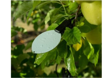 Leaf Wetness Sensor Disease